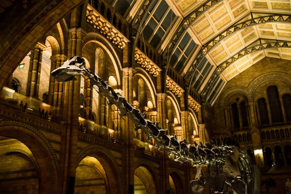 London Event Photographer Natural History Museum Photography